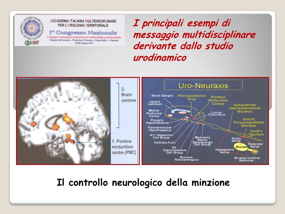 Il controllo neurologico della minzione