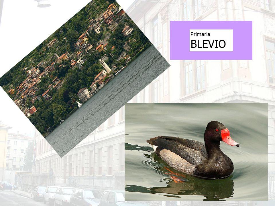 Primaria BLEVIO