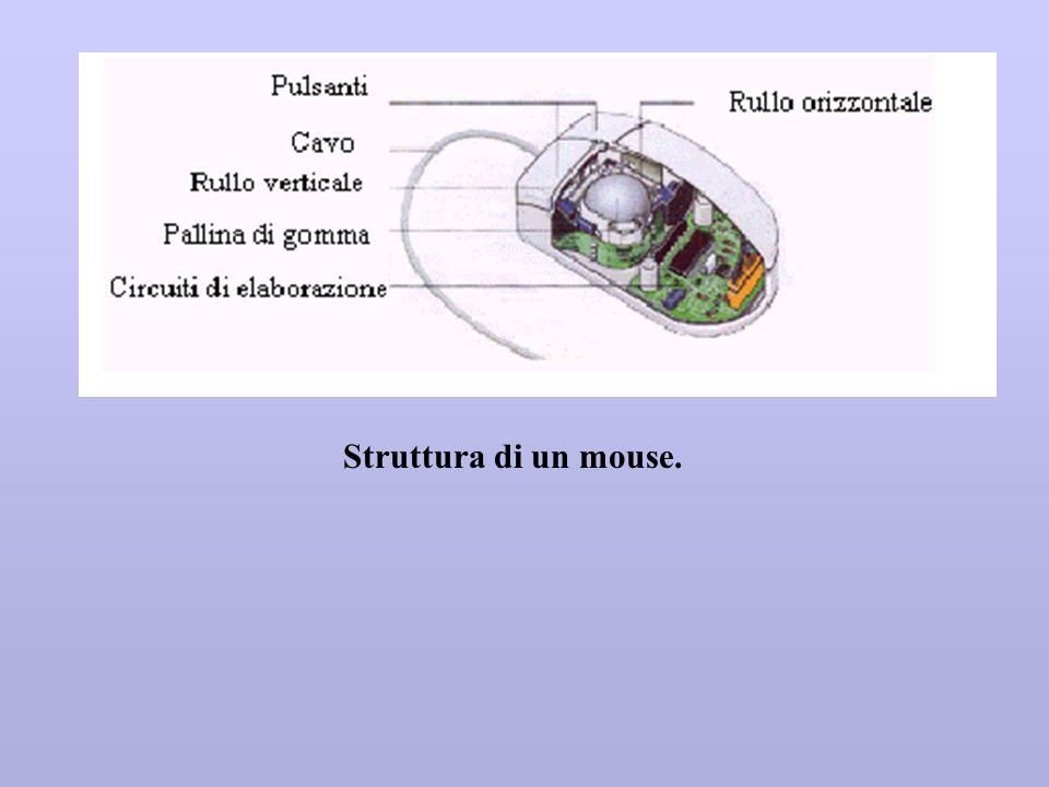Struttura di un mouse.