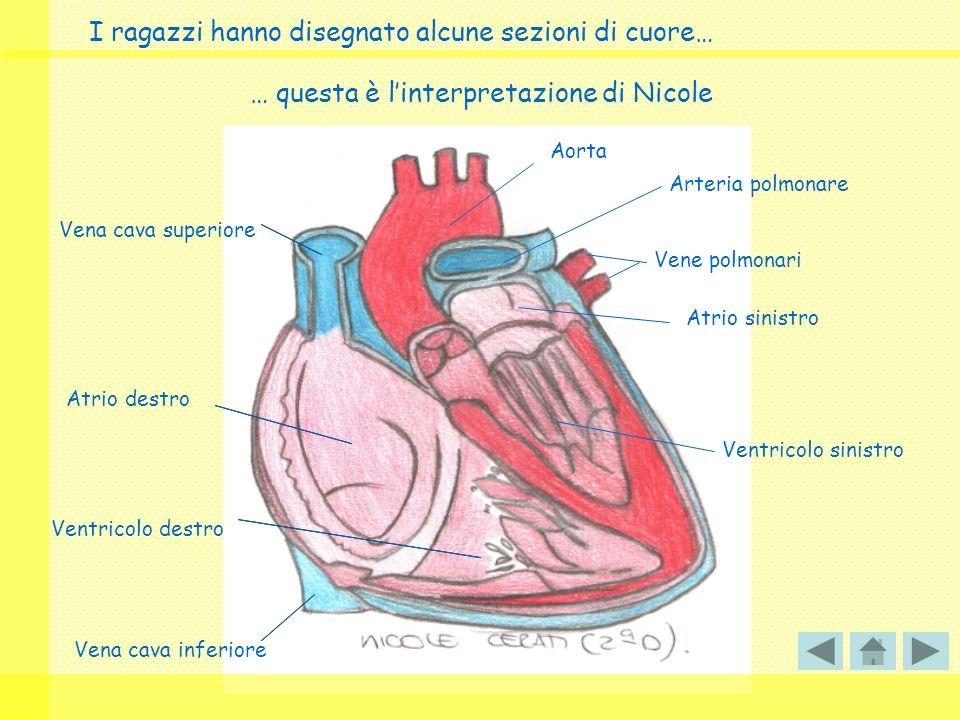 I ragazzi hanno disegnato alcune sezioni di cuore…