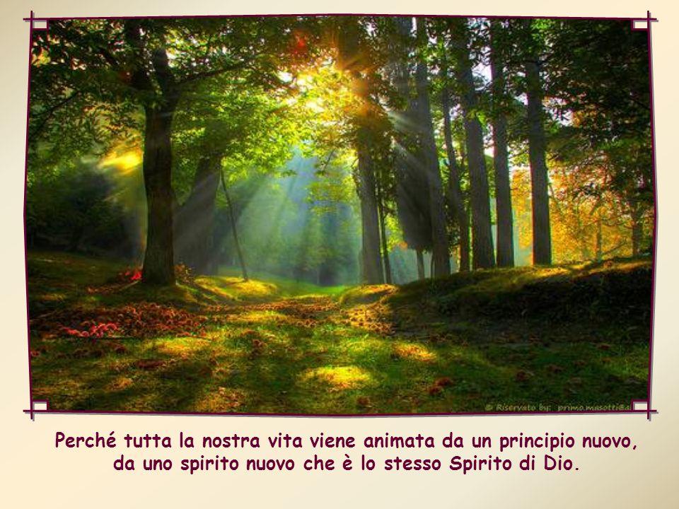 Perché tutta la nostra vita viene animata da un principio nuovo, da uno spirito nuovo che è lo stesso Spirito di Dio.