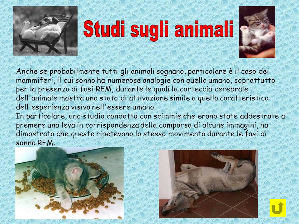 Studi sugli animali