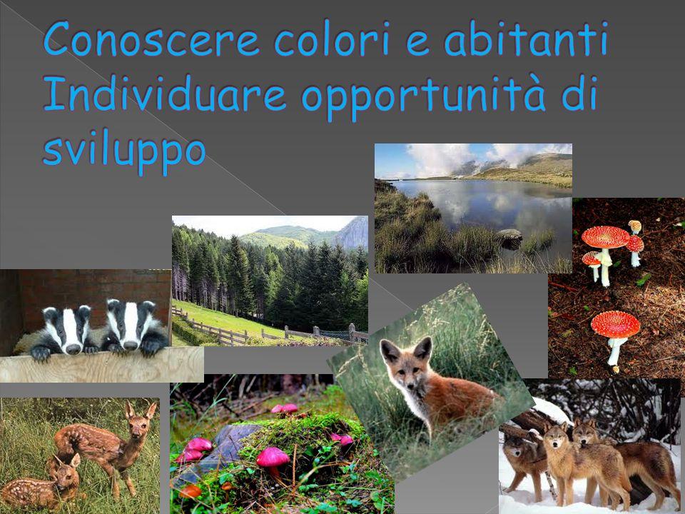 Conoscere colori e abitanti Individuare opportunità di sviluppo