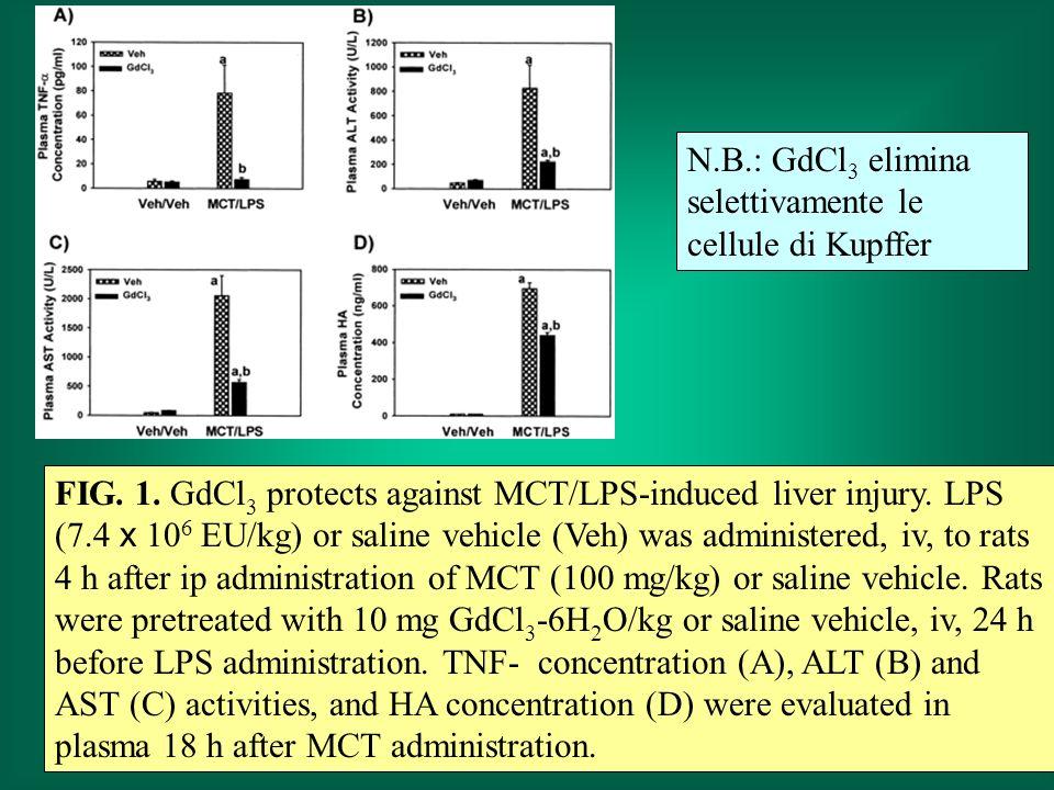 N.B.: GdCl3 elimina selettivamente le cellule di Kupffer