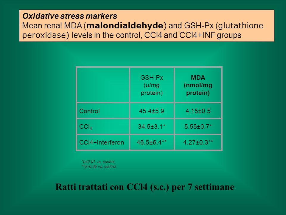 Ratti trattati con CCl4 (s.c.) per 7 settimane