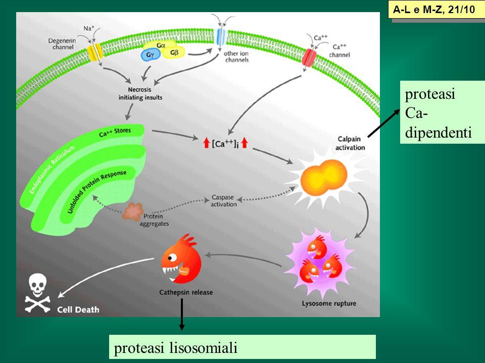 proteasi Ca-dipendenti
