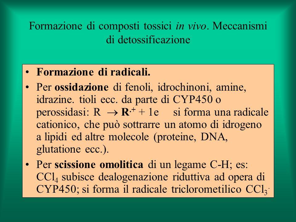 Formazione di composti tossici in vivo. Meccanismi di detossificazione