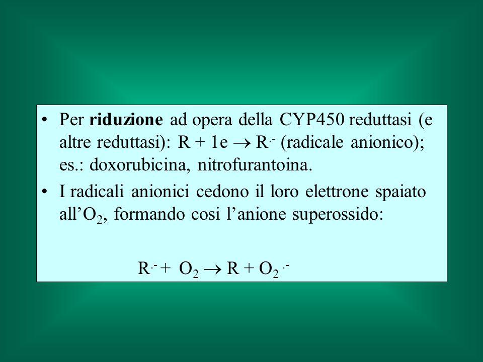 Per riduzione ad opera della CYP450 reduttasi (e altre reduttasi): R + 1e  R.- (radicale anionico); es.: doxorubicina, nitrofurantoina.