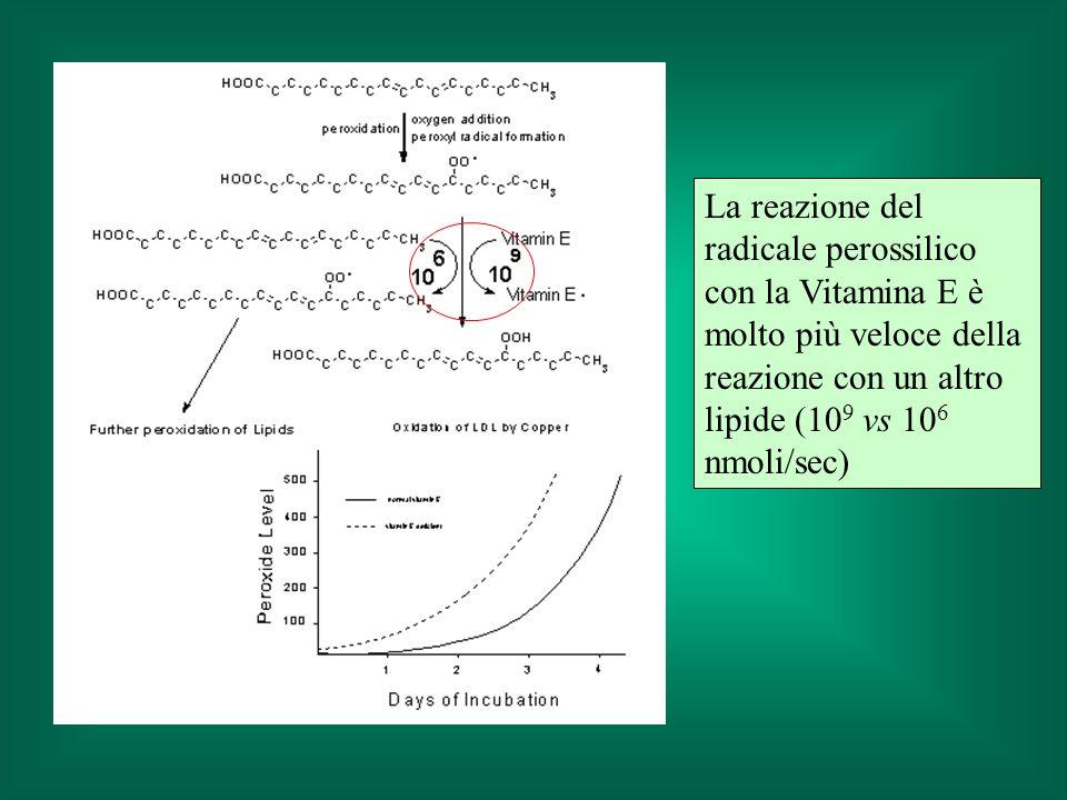 La reazione del radicale perossilico con la Vitamina E è molto più veloce della reazione con un altro lipide (109 vs 106 nmoli/sec)