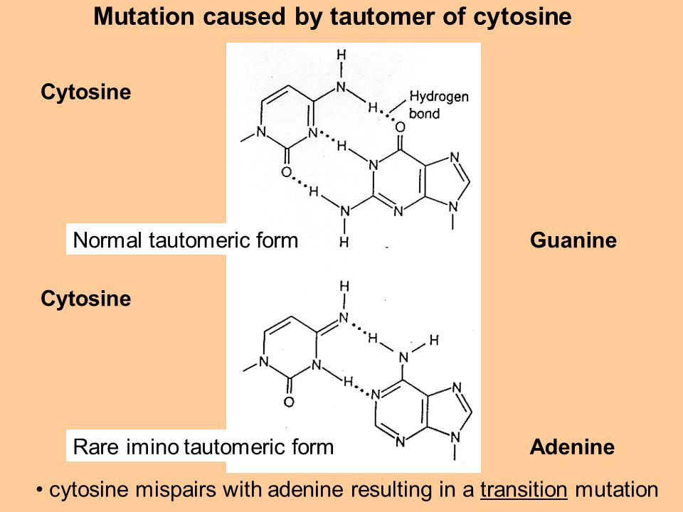 Mutation caused by tautomer of cytosine