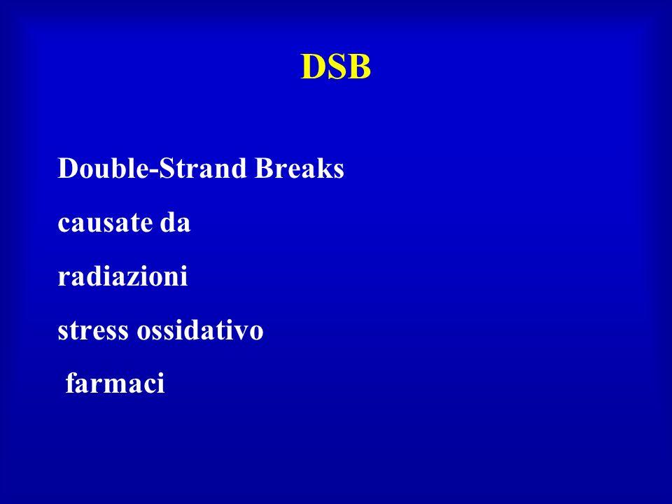 DSB Double-Strand Breaks causate da radiazioni stress ossidativo