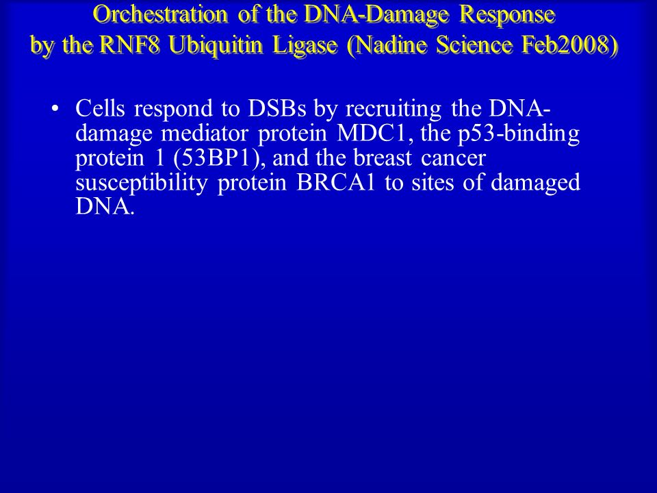 Orchestration of the DNA-Damage Response by the RNF8 Ubiquitin Ligase (Nadine Science Feb2008)