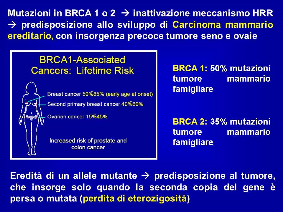 Mutazioni in BRCA 1 o 2  inattivazione meccanismo HRR  predisposizione allo sviluppo di Carcinoma mammario ereditario, con insorgenza precoce tumore seno e ovaie