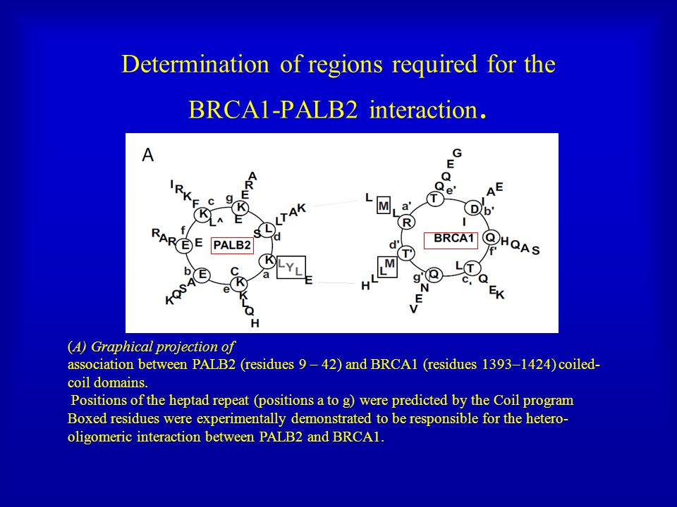 Determination of regions required for the BRCA1-PALB2 interaction.