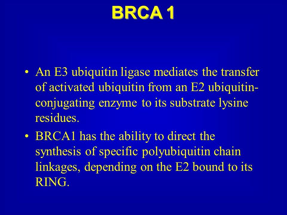 BRCA 1 An E3 ubiquitin ligase mediates the transfer of activated ubiquitin from an E2 ubiquitin-conjugating enzyme to its substrate lysine residues.