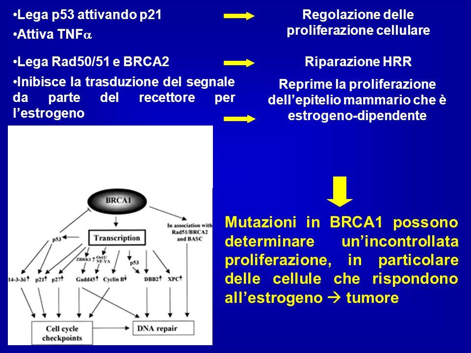 Regolazione delle proliferazione cellulare