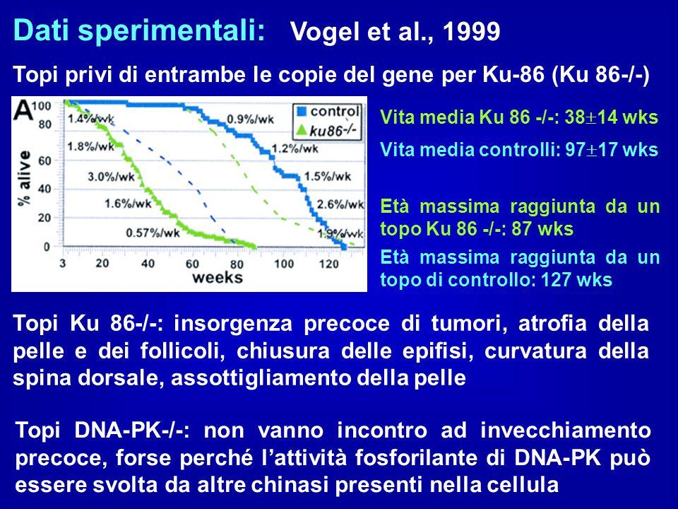 Dati sperimentali: Vogel et al., 1999