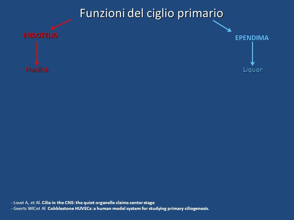 Funzioni del ciglio primario