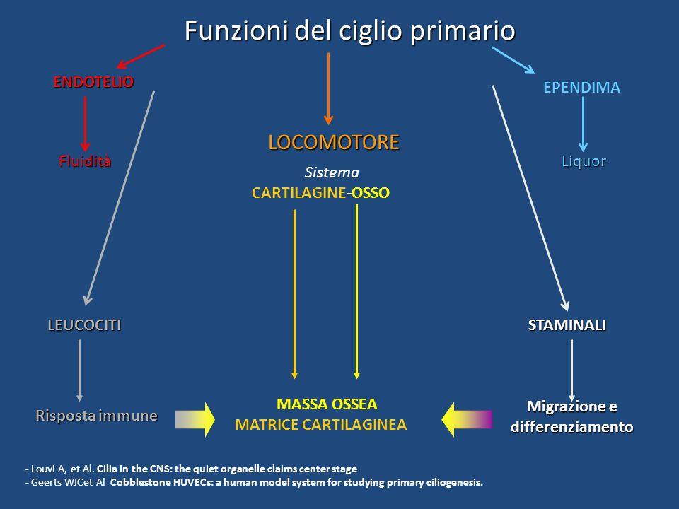 Migrazione e differenziamento