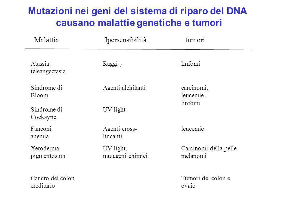 Mutazioni nei geni del sistema di riparo del DNA