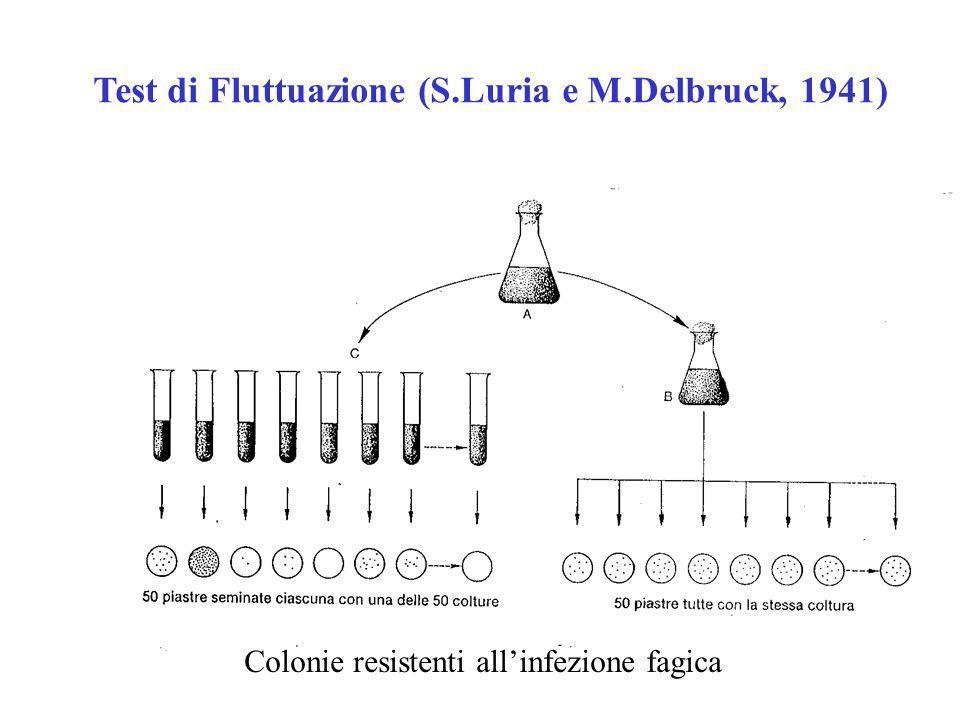 Test di Fluttuazione (S.Luria e M.Delbruck, 1941)