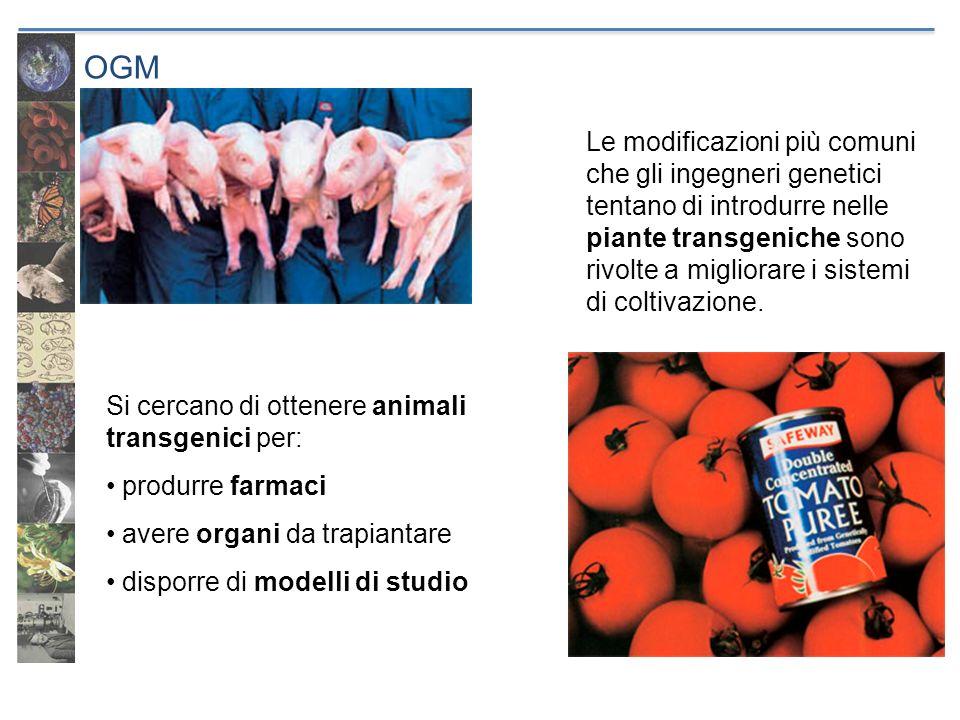 OGMSi cercano di ottenere animali transgenici per: produrre farmaci. avere organi da trapiantare. disporre di modelli di studio.