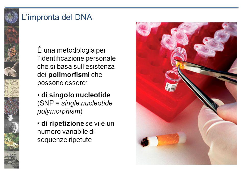 L'impronta del DNA È una metodologia per l'identificazione personale che si basa sull'esistenza dei polimorfismi che possono essere: