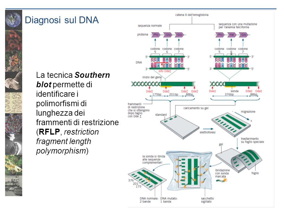 Diagnosi sul DNA