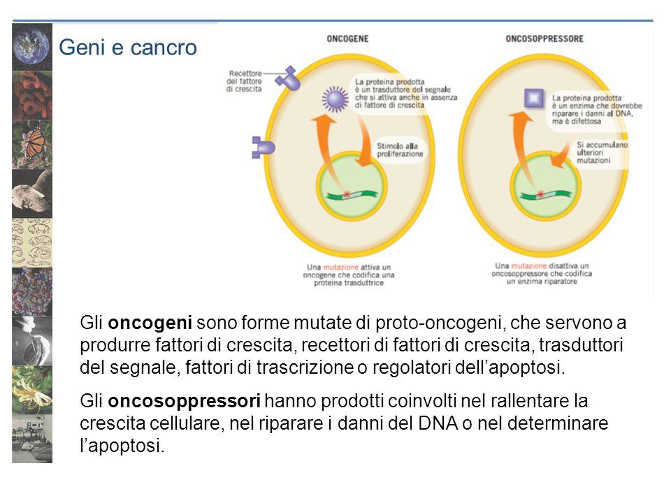 Geni e cancro