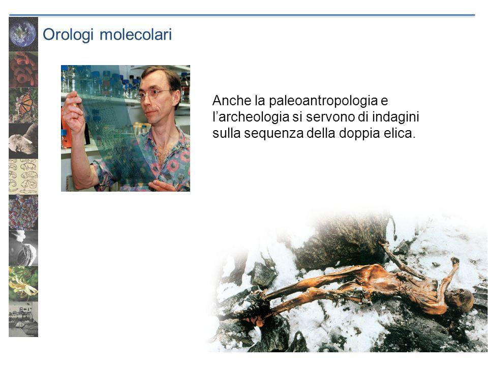 Orologi molecolari Anche la paleoantropologia e l'archeologia si servono di indagini sulla sequenza della doppia elica.