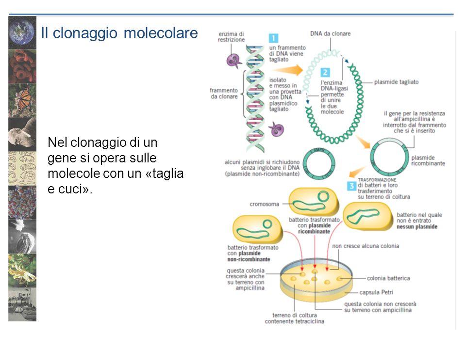 Il clonaggio molecolare