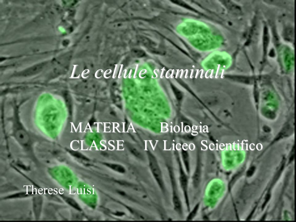 Le cellule staminali MATERIA Biologia CLASSE IV Liceo Scientifico