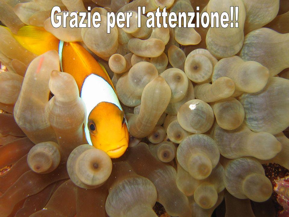 Grazie per l attenzione!!