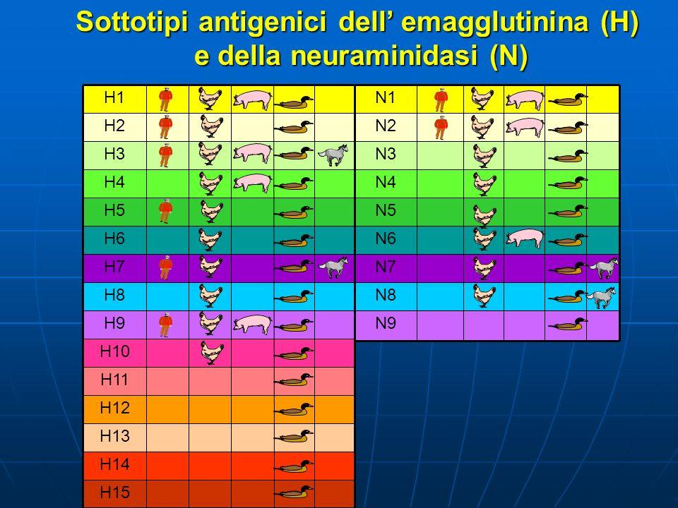 Sottotipi antigenici dell' emagglutinina (H) e della neuraminidasi (N)