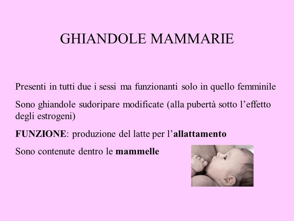 GHIANDOLE MAMMARIE Presenti in tutti due i sessi ma funzionanti solo in quello femminile.