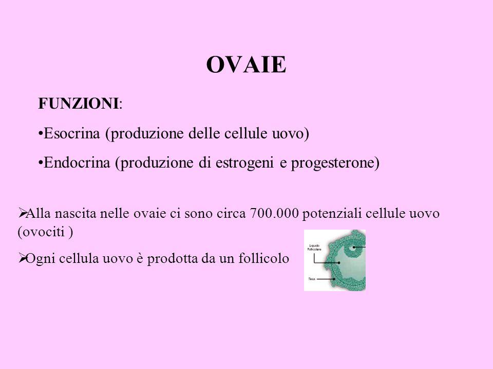 OVAIE FUNZIONI: Esocrina (produzione delle cellule uovo)