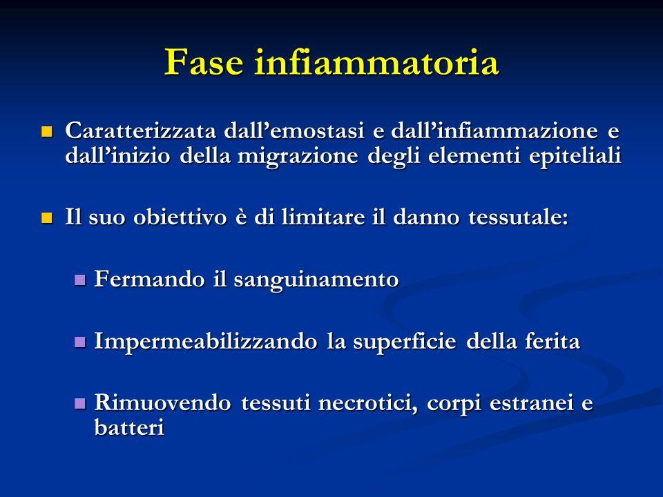 Fase infiammatoria Caratterizzata dall'emostasi e dall'infiammazione e dall'inizio della migrazione degli elementi epiteliali.