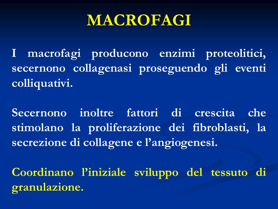 MACROFAGI I macrofagi producono enzimi proteolitici, secernono collagenasi proseguendo gli eventi colliquativi.