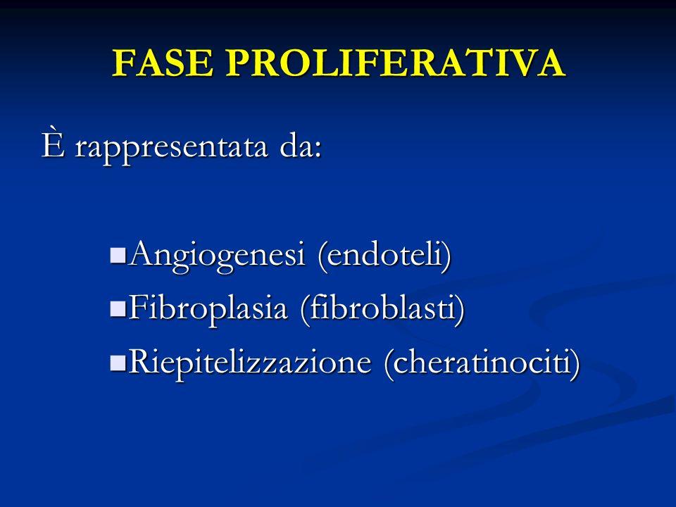FASE PROLIFERATIVA È rappresentata da: Angiogenesi (endoteli)