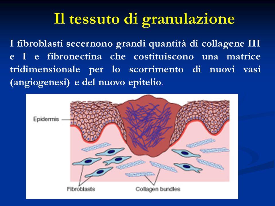Il tessuto di granulazione
