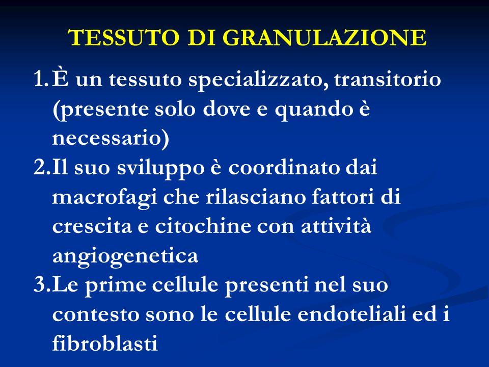 TESSUTO DI GRANULAZIONE