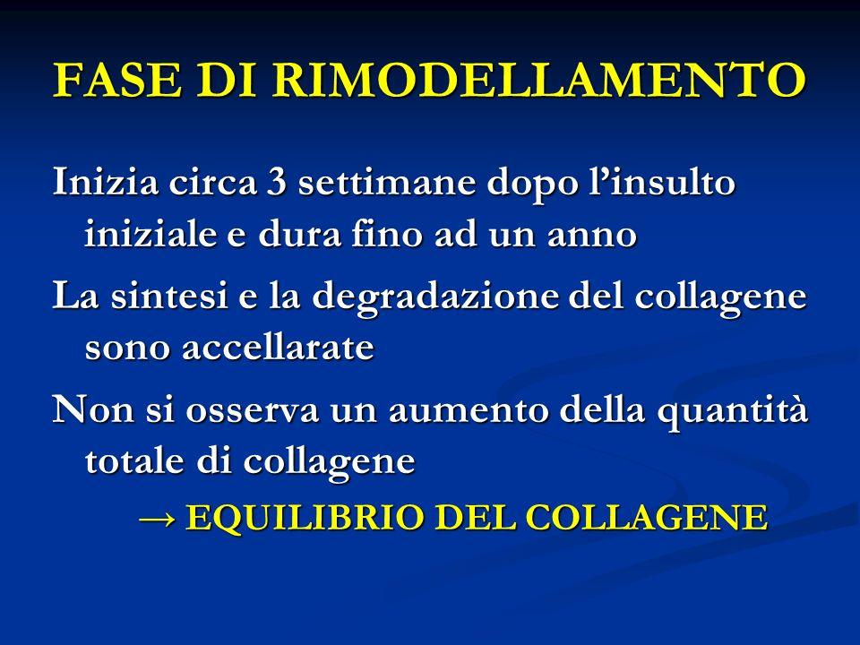 FASE DI RIMODELLAMENTO