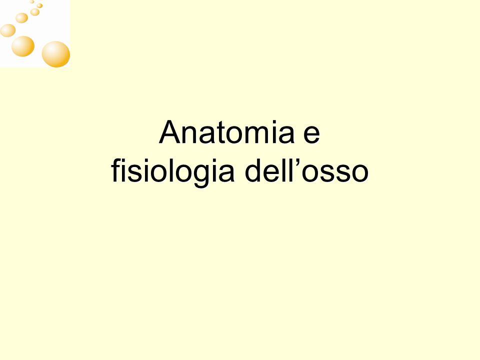 Anatomia e fisiologia dell'osso