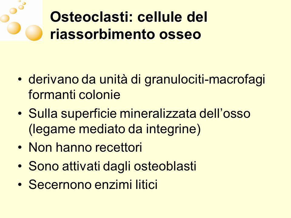 Osteoclasti: cellule del riassorbimento osseo