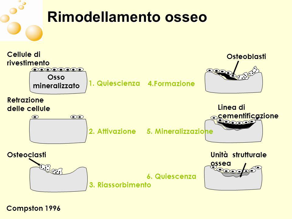 Rimodellamento osseo Cellule di rivestimento Osteoblasti