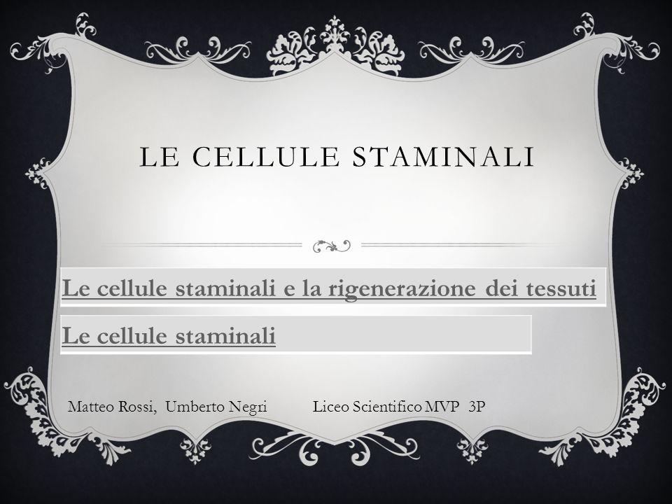 Le CELLULE STAMINALI Le cellule staminali e la rigenerazione dei tessuti. Le cellule staminali.