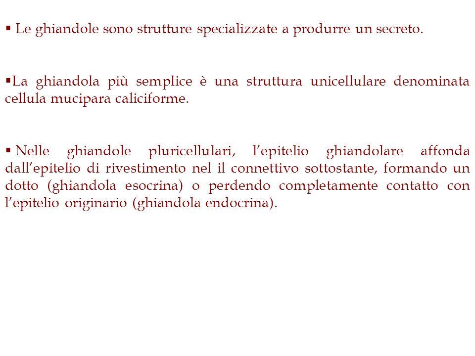 Le ghiandole sono strutture specializzate a produrre un secreto.