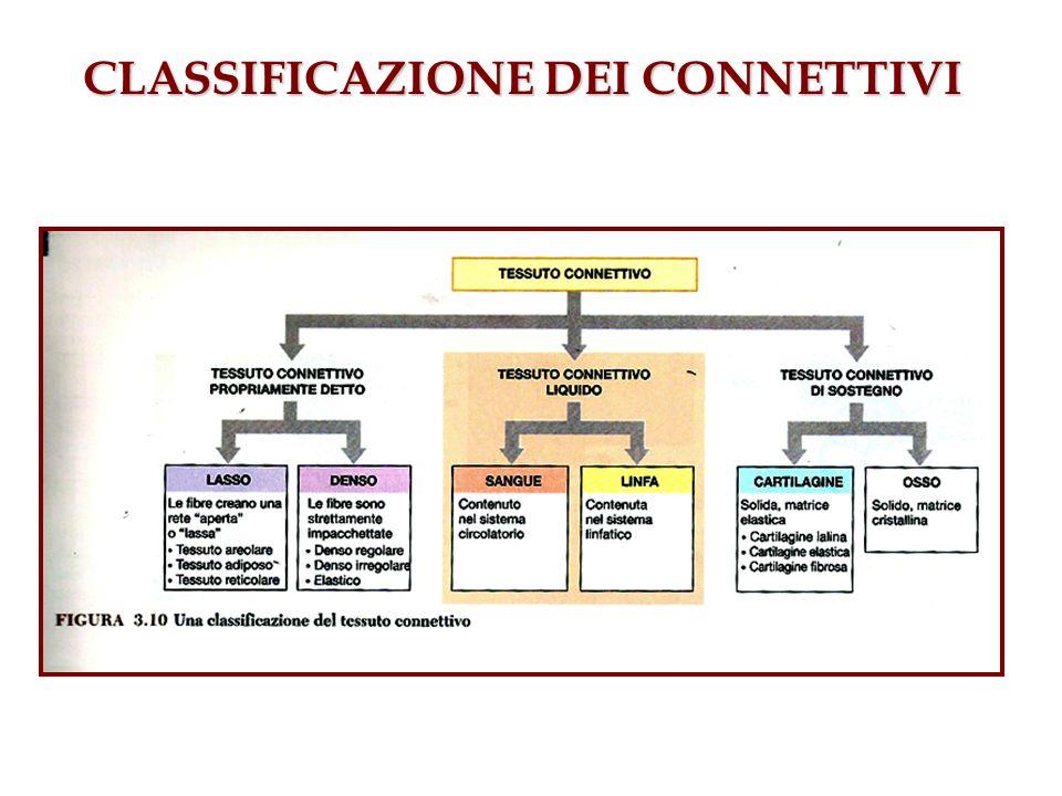 CLASSIFICAZIONE DEI CONNETTIVI
