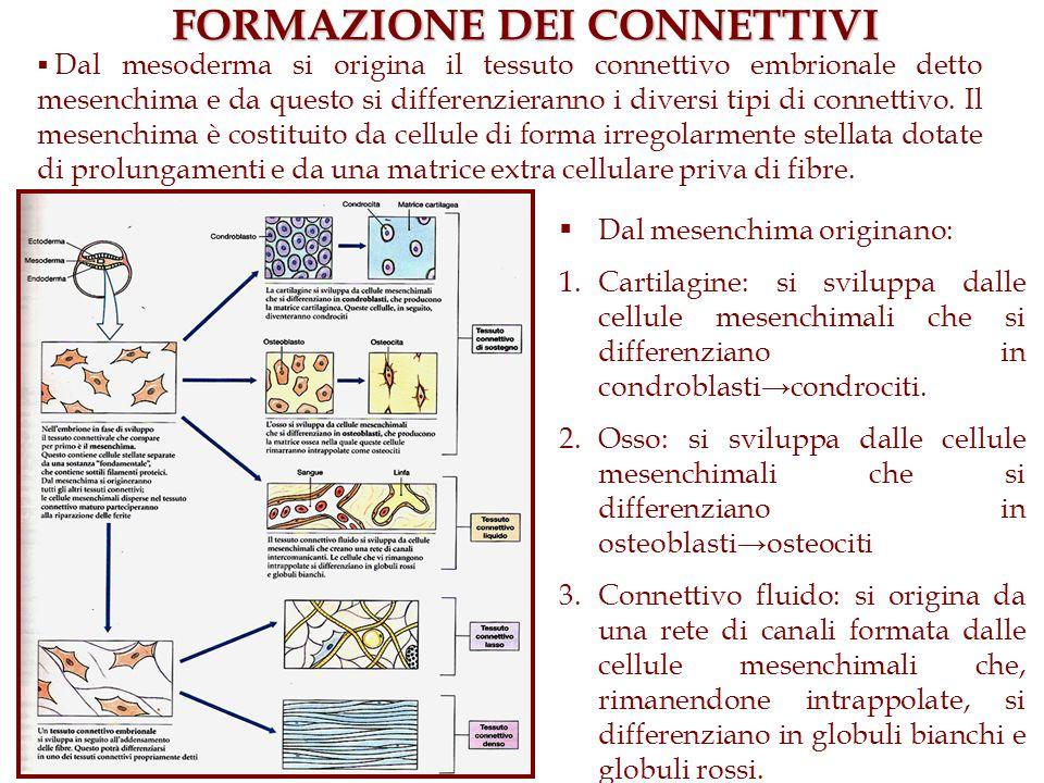 FORMAZIONE DEI CONNETTIVI