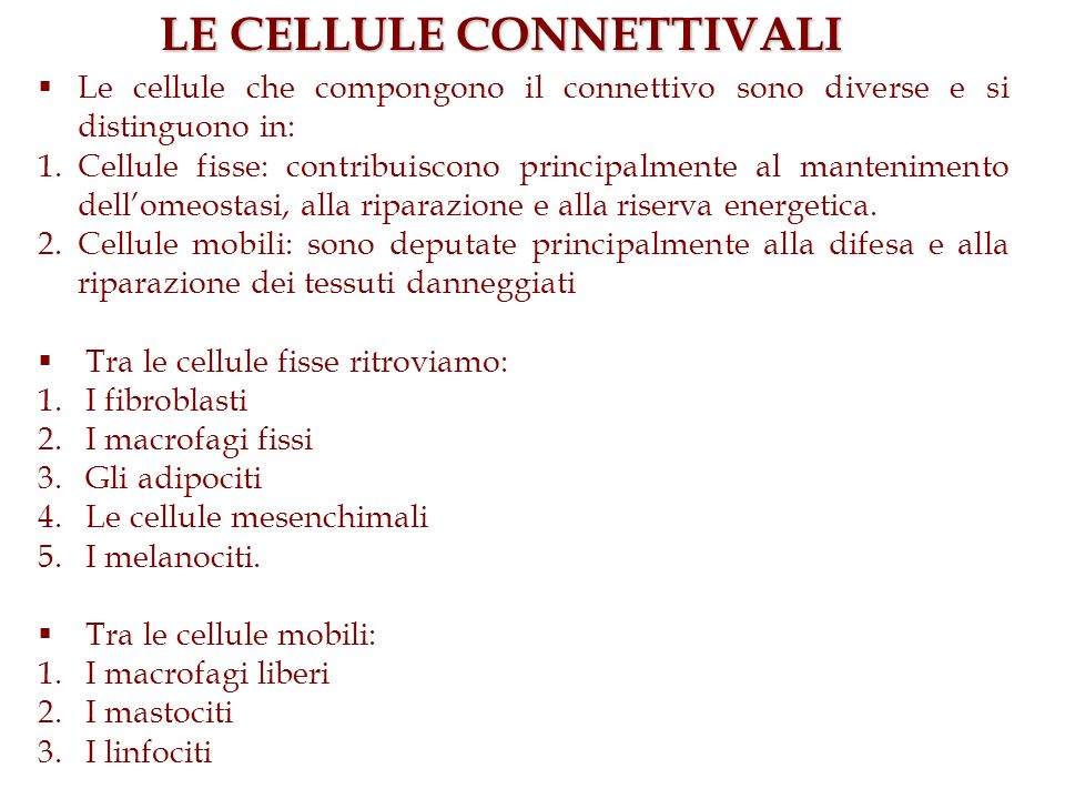 LE CELLULE CONNETTIVALI